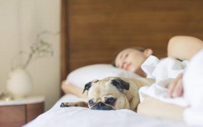 Should You Sleep in a Freshly Painted Room?
